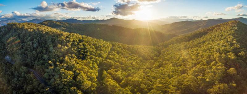 panorama of rainforest