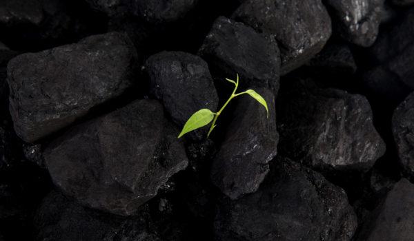 plant growing through coal